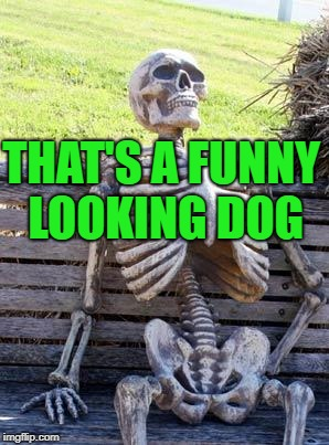 Waiting Skeleton Meme | THAT'S A FUNNY LOOKING DOG | image tagged in memes,waiting skeleton | made w/ Imgflip meme maker