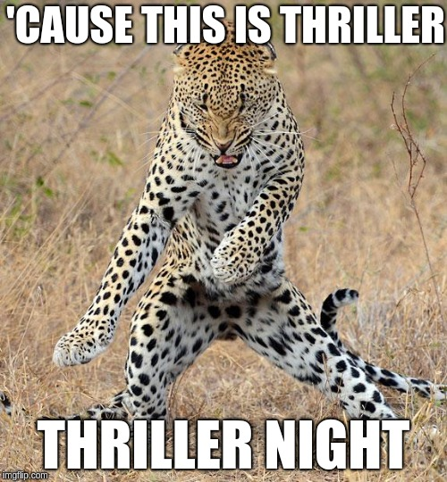 Thrill-purr | 'CAUSE THIS IS THRILLER THRILLER NIGHT | image tagged in leopard dancing,thriller,cat,memes | made w/ Imgflip meme maker
