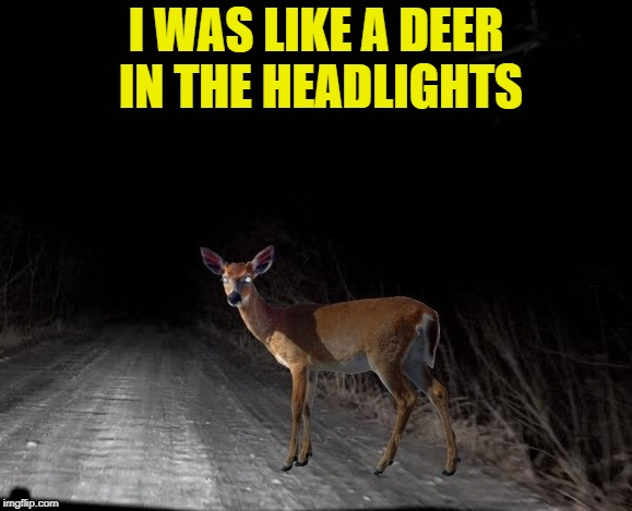 I WAS LIKE A DEER IN THE HEADLIGHTS | made w/ Imgflip meme maker
