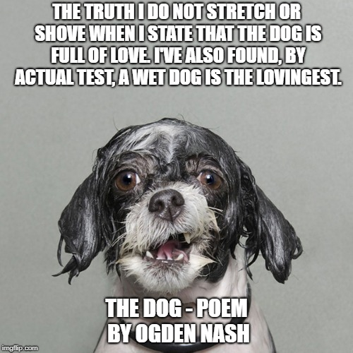 THE TRUTH I DO NOT STRETCH OR SHOVE WHEN I STATE THAT THE DOG IS FULL OF LOVE. I'VE ALSO FOUND, BY ACTUAL TEST, A WET DOG IS THE LOVINGEST.  | image tagged in wet dog | made w/ Imgflip meme maker