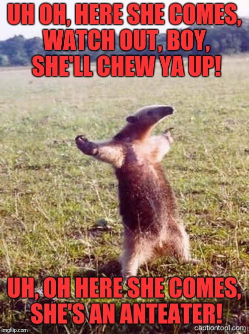 anteater | UH OH, HERE SHE COMES, WATCH OUT, BOY, SHE'LL CHEW YA UP! UH, OH HERE SHE COMES, SHE'S AN ANTEATER! | image tagged in anteater | made w/ Imgflip meme maker
