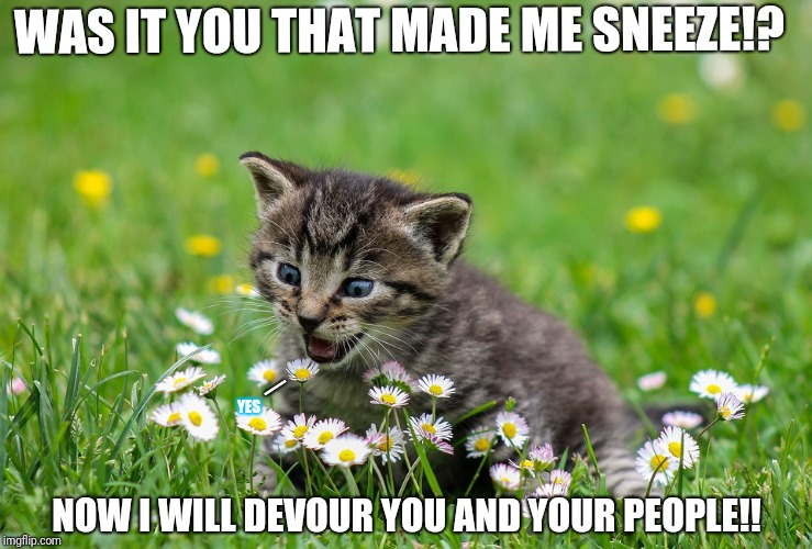 Kitty the destroyer!!!! | WAS IT YOU THAT MADE ME SNEEZE!? NOW I WILL DEVOUR YOU AND YOUR PEOPLE!! YES _ | image tagged in the destroyer,kitten,destruction,cute,memes,funny | made w/ Imgflip meme maker