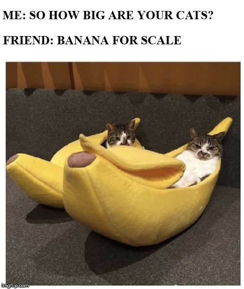 "Google ""Banana for scale"" if you don't understand  