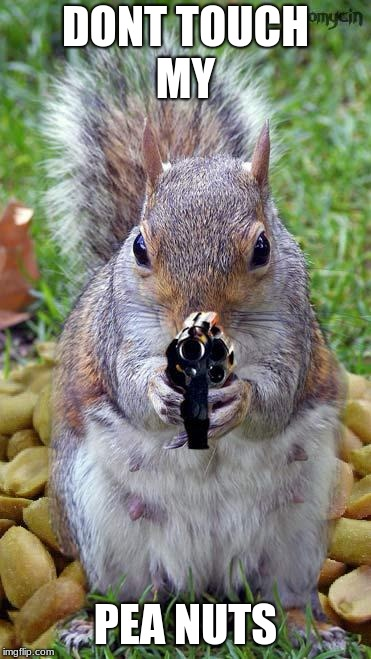 funny squirrels with guns (5) | DONT TOUCH MY PEA NUTS | image tagged in funny squirrels with guns 5 | made w/ Imgflip meme maker