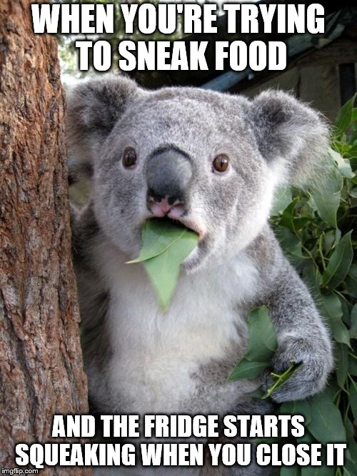 Surprised Koala Meme | WHEN YOU'RE TRYING TO SNEAK FOOD AND THE FRIDGE STARTS SQUEAKING WHEN YOU CLOSE IT | image tagged in memes,surprised koala | made w/ Imgflip meme maker