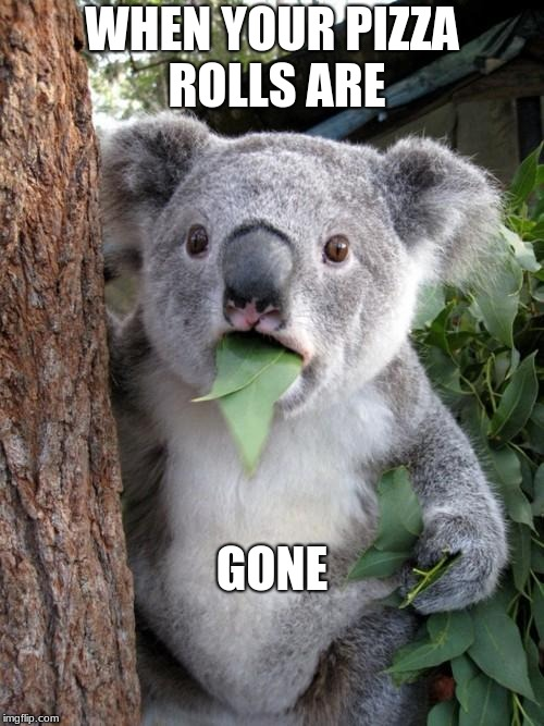 Surprised Koala Meme | WHEN YOUR PIZZA ROLLS ARE GONE | image tagged in memes,surprised koala | made w/ Imgflip meme maker