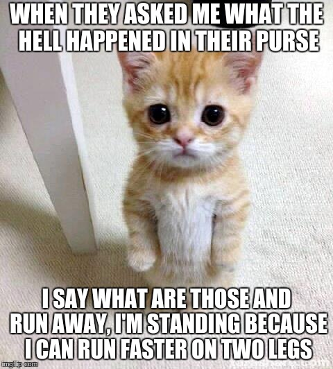 Cute Cat Meme | WHEN THEY ASKED ME WHAT THE HELL HAPPENED IN THEIR PURSE I SAY WHAT ARE THOSE AND RUN AWAY, I'M STANDING BECAUSE I CAN RUN FASTER ON TWO LEG | image tagged in memes,cute cat | made w/ Imgflip meme maker