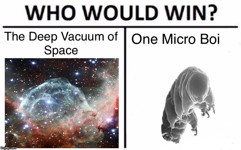 Wou Would Win? Vacuum of Space? or One Micro Boi? | image tagged in who would win,sea bear,boi,science,space,so true memes | made w/ Imgflip meme maker