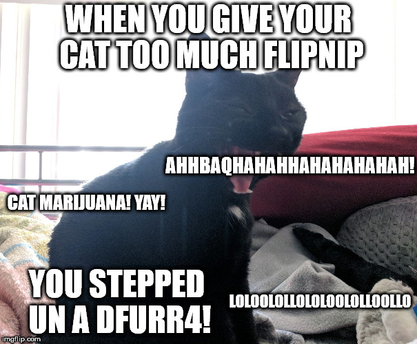 WHEN YOU GIVE YOUR CAT TOO MUCH FLIPNIP AHHBAQHAHAHHAHAHAHAHAH! CAT MARIJUANA! YAY! YOU STEPPED UN A DFURR4! LOLOOLOLLOLOLOOLOLLOOLLO | image tagged in laughing murr | made w/ Imgflip meme maker