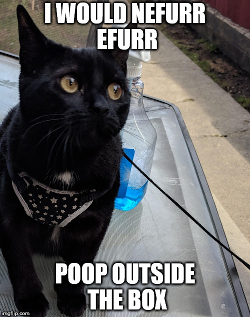 I WOULD NEFURR EFURR POOP OUTSIDE THE BOX | image tagged in innocent murr | made w/ Imgflip meme maker