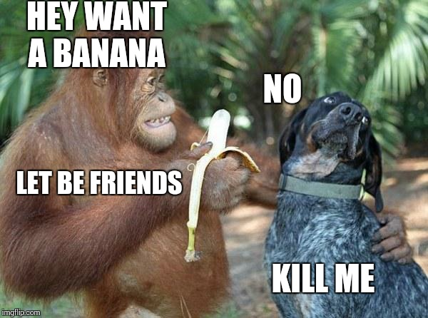Grumpy dog and Orangutan   |  HEY WANT  A BANANA; NO; LET BE FRIENDS; KILL ME | image tagged in dog and orangutan friends,grumpy dog,orangutan,grumpy cat | made w/ Imgflip meme maker