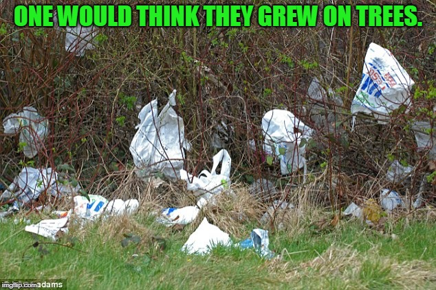 plastic | ONE WOULD THINK THEY GREW ON TREES. | image tagged in plastic | made w/ Imgflip meme maker