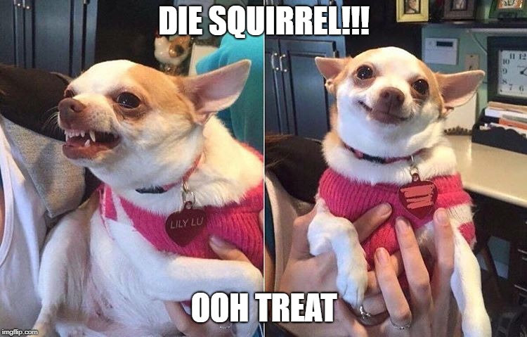 angry dog meme | DIE SQUIRREL!!! OOH TREAT | image tagged in angry dog meme | made w/ Imgflip meme maker