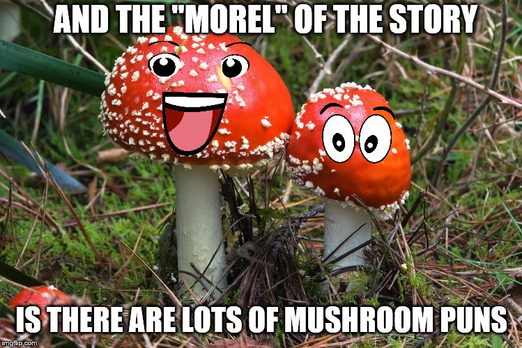 "AND THE ""MOREL"" OF THE STORY IS THERE ARE LOTS OF MUSHROOM PUNS 