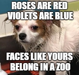ROSES ARE RED VIOLETS ARE BLUE; FACES LIKE YOURS BELONG IN A ZOO | image tagged in grumpy dog | made w/ Imgflip meme maker