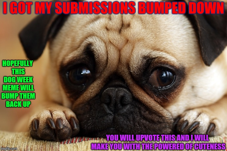 Dog Week | I GOT MY SUBMISSIONS BUMPED DOWN HOPEFULLY THIS DOG WEEK MEME WILL BUMP THEM BACK UP YOU WILL UPVOTE THIS AND I WILL MAKE YOU WITH THE POWER | image tagged in sad pug,dog week,stuff | made w/ Imgflip meme maker