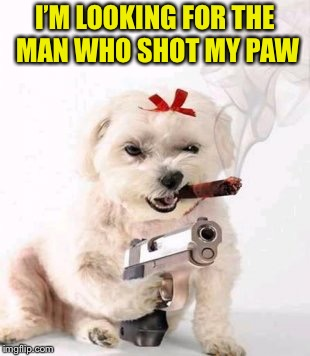 Dog week May 1st to May 8th a Landon_the_memer and NikkoBellic event | I'M LOOKING FOR THE MAN WHO SHOT MY PAW | image tagged in memes,dog week,shooting,gun | made w/ Imgflip meme maker