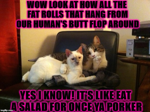 JUDGMENTAL FELINES | WOW LOOK AT HOW ALL THE FAT ROLLS THAT HANG FROM OUR HUMAN'S BUTT FLOP AROUND YES I KNOW! IT'S LIKE EAT A SALAD FOR ONCE YA PORKER | image tagged in judgmental felines | made w/ Imgflip meme maker