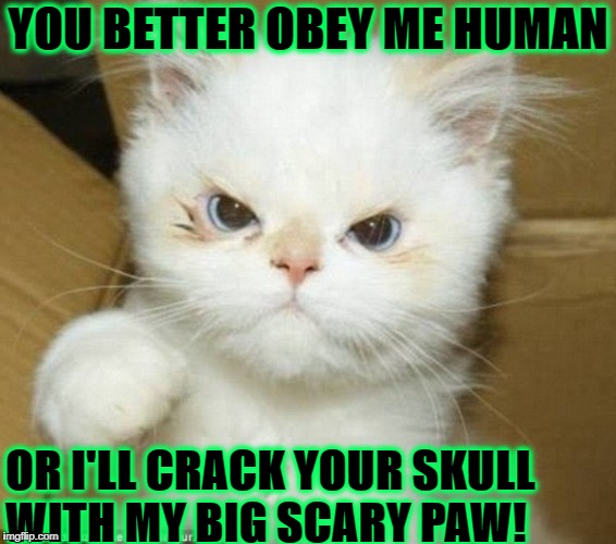 YOU BETTER OBEY ME HUMAN OR I'LL CRACK YOUR SKULL WITH MY BIG SCARY PAW! | image tagged in pathetic kitten | made w/ Imgflip meme maker