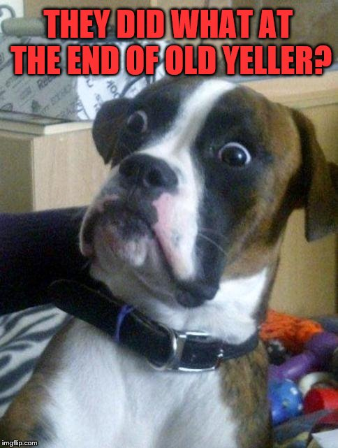 Dog week May 1-8, a Landon_the_memer and NikkoBellic event | THEY DID WHAT AT THE END OF OLD YELLER? | image tagged in suprised boxer,memes,dog week,dogs,old yeller | made w/ Imgflip meme maker