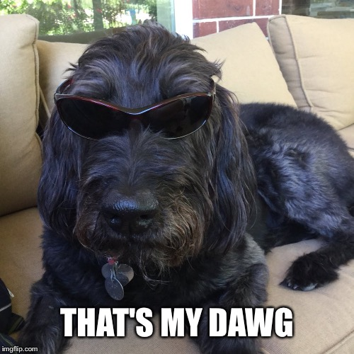 THAT'S MY DAWG | made w/ Imgflip meme maker