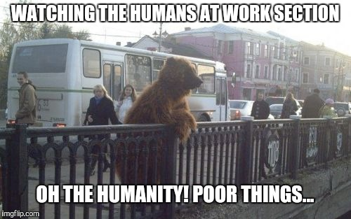 City Bear | WATCHING THE HUMANS AT WORK SECTION OH THE HUMANITY! POOR THINGS... | image tagged in memes,city bear | made w/ Imgflip meme maker