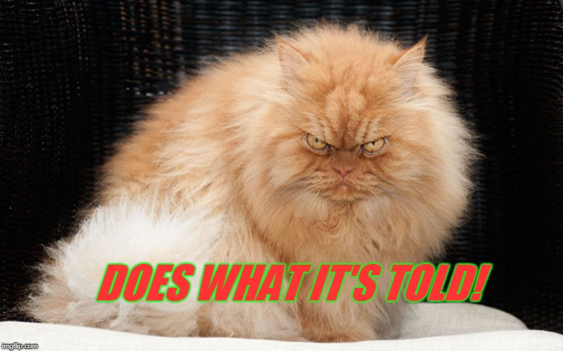 Angry Cat | DOES WHAT IT'S TOLD! | image tagged in angry cat | made w/ Imgflip meme maker