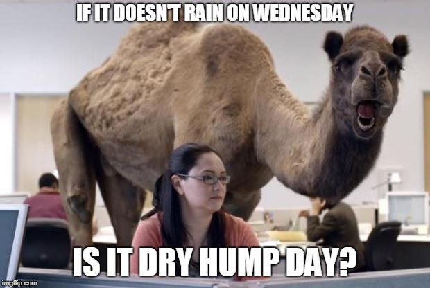 Camel | IF IT DOESN'T RAIN ON WEDNESDAY IS IT DRY HUMP DAY? | image tagged in camel | made w/ Imgflip meme maker