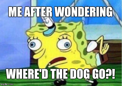 Mocking Spongebob Meme | ME AFTER WONDERING WHERE'D THE DOG GO?! | image tagged in memes,mocking spongebob | made w/ Imgflip meme maker
