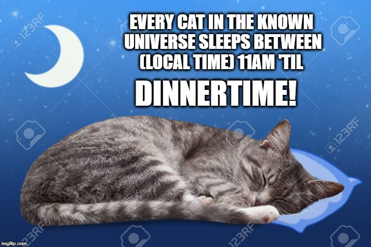 Nap Time | EVERY CAT IN THE KNOWN UNIVERSE SLEEPS BETWEEN (LOCAL TIME) 11AM 'TIL DINNERTIME! | image tagged in cats,funny cat memes,animals,meme,cute cat | made w/ Imgflip meme maker