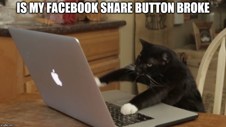 IS MY FACEBOOK SHARE BUTTON BROKE | image tagged in furiously typing cat | made w/ Imgflip meme maker