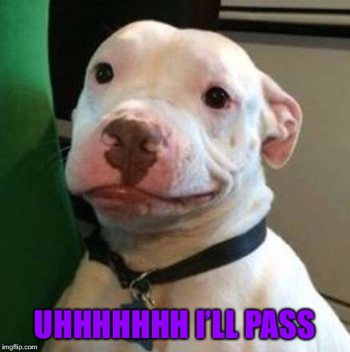 Awkward Dog | UHHHHHHH I'LL PASS | image tagged in awkward dog | made w/ Imgflip meme maker