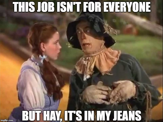 Who Would Have Thought? | THIS JOB ISN'T FOR EVERYONE BUT HAY, IT'S IN MY JEANS | image tagged in scarecrow and dorothy,memes | made w/ Imgflip meme maker