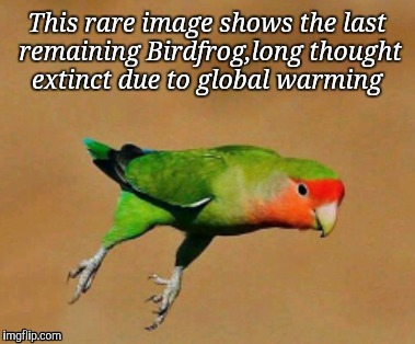 Save our species  | This rare image shows the last remaining Birdfrog,long thought extinct due to global warming | image tagged in memes,nature,wildlife,original meme | made w/ Imgflip meme maker
