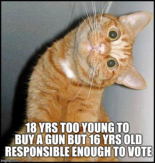 Stupid Cat | 18 YRS TOO YOUNG TO BUY A GUN BUT 16 YRS OLD RESPONSIBLE ENOUGH TO VOTE | image tagged in stupid cat | made w/ Imgflip meme maker