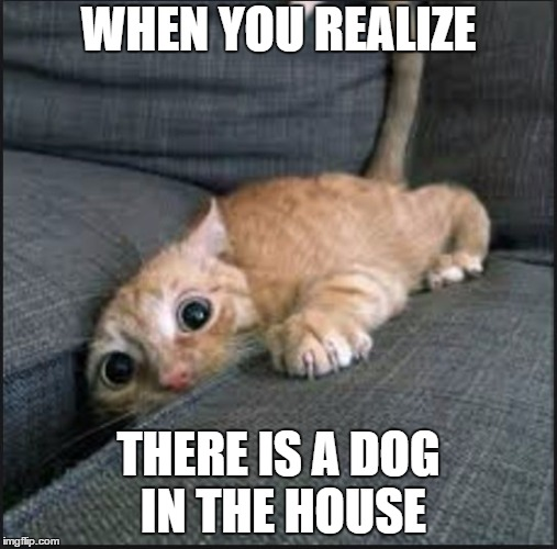 WHEN YOU REALIZE THERE IS A DOG IN THE HOUSE | image tagged in when you realize there is a dog in the house | made w/ Imgflip meme maker