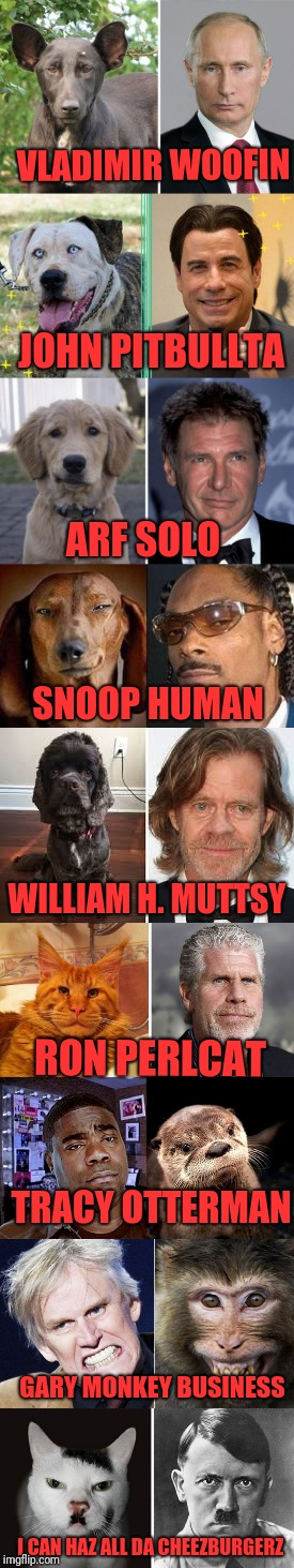 Look-alikes! | VLADIMIR WOOFIN JOHN PITBULLTA ARF SOLO SNOOP HUMAN WILLIAM H. MUTTSY RON PERLCAT TRACY OTTERMAN GARY MONKEY BUSINESS I CAN HAZ ALL DA CHEEZ | image tagged in memes,funny,dank,celebs,animals,similarities | made w/ Imgflip meme maker