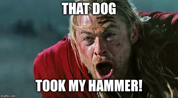 Thor No! | THAT DOG TOOK MY HAMMER! | image tagged in thor no | made w/ Imgflip meme maker