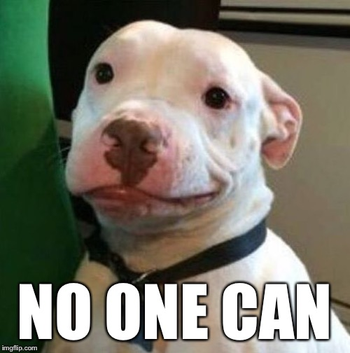 Awkward Dog | NO ONE CAN | image tagged in awkward dog | made w/ Imgflip meme maker