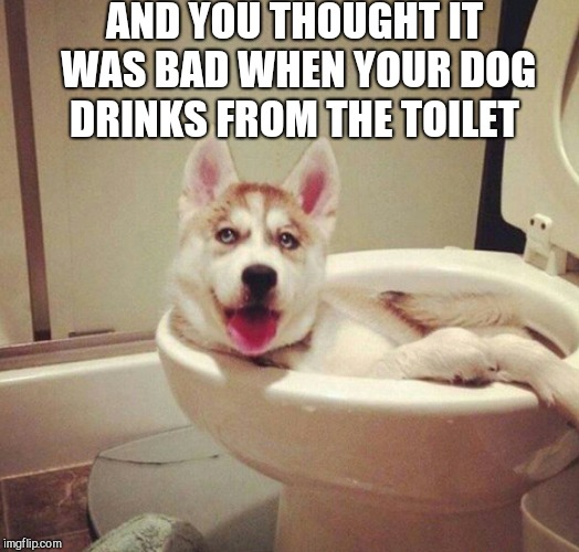 Dog week, May 1-8, a Landon_the_memer and NikkoBellic event!  | AND YOU THOUGHT IT WAS BAD WHEN YOUR DOG DRINKS FROM THE TOILET | image tagged in jbmemegeek,dog week,funny dogs | made w/ Imgflip meme maker