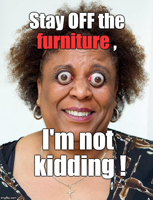 Opps | Stay OFF the furniture , I'm not kidding ! furniture | image tagged in opps | made w/ Imgflip meme maker
