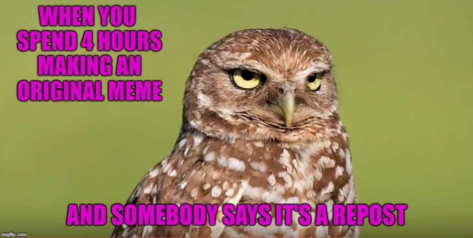 I've made an original meme before, then someone reposted it...then I got accused of being the reposter!!! |  WHEN YOU SPEND 4 HOURS MAKING AN ORIGINAL MEME; AND SOMEBODY SAYS IT'S A REPOST | image tagged in death stare owl,memes,reposts,funny,doctordoomsday180 | made w/ Imgflip meme maker