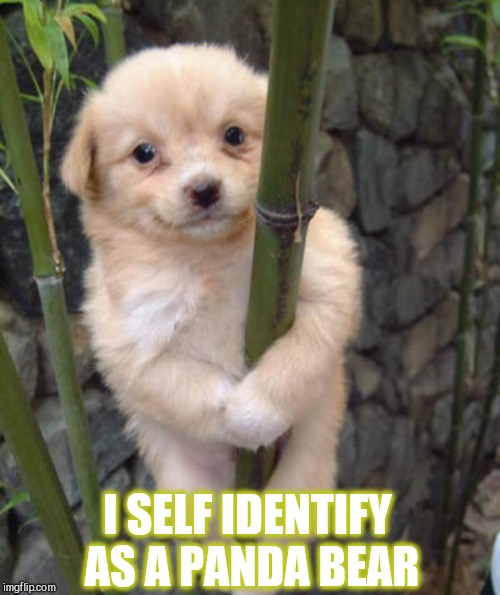 And a cute Panda he is lol Dog week, May 1-8, a Landon_the_memer and NikkoBellic event! | I SELF IDENTIFY AS A PANDA BEAR | image tagged in jbmemegeek,dog week,cute dog,cute puppies,panda fail | made w/ Imgflip meme maker