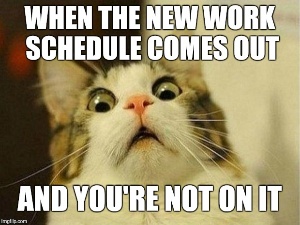 Scared Cat Meme | WHEN THE NEW WORK SCHEDULE COMES OUT AND YOU'RE NOT ON IT | image tagged in memes,scared cat,retail,work | made w/ Imgflip meme maker