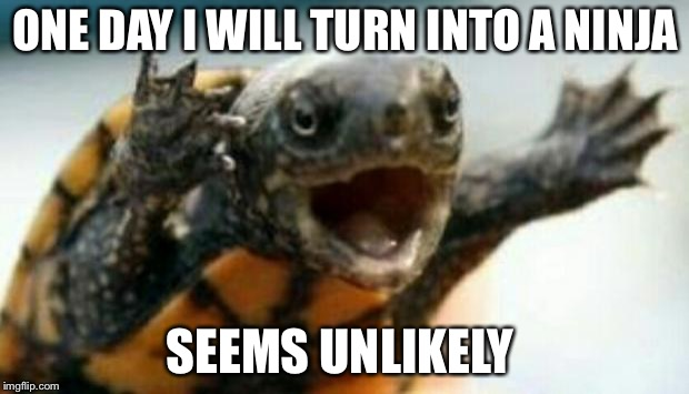 Turtle Say What? | ONE DAY I WILL TURN INTO A NINJA SEEMS UNLIKELY | image tagged in turtle say what | made w/ Imgflip meme maker