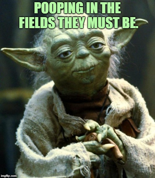 Star Wars Yoda Meme | POOPING IN THE FIELDS THEY MUST BE. | image tagged in memes,star wars yoda | made w/ Imgflip meme maker