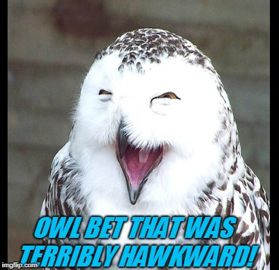 OWL BET THAT WAS TERRIBLY HAWKWARD! | made w/ Imgflip meme maker