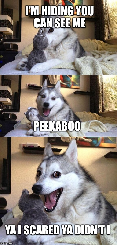 Bad Pun Dog Meme | I'M HIDING YOU CAN SEE ME PEEKABOO YA I SCARED YA DIDN'T I | image tagged in memes,bad pun dog | made w/ Imgflip meme maker