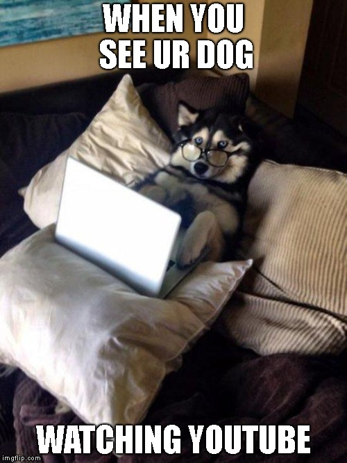 Husky Study | WHEN YOU SEE UR DOG WATCHING YOUTUBE | image tagged in husky study | made w/ Imgflip meme maker