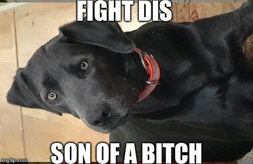 Try this doge | FIGHT DIS SON OF A B**CH | image tagged in memes | made w/ Imgflip meme maker